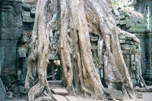 Cambodia (Angkor): Ta Prohm and Vicinity picture 13