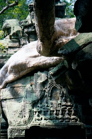 Cambodia (Angkor): Ta Prohm and Vicinity picture 14
