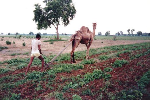 India Themes: Farming Technology picture 3