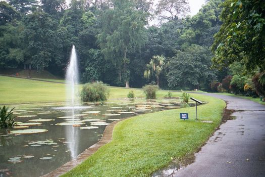 Indonesia: The Botanical Gardens at Bogor picture 6