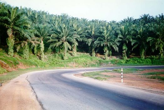 Malaysia: Oil Palm and Rubber picture 1