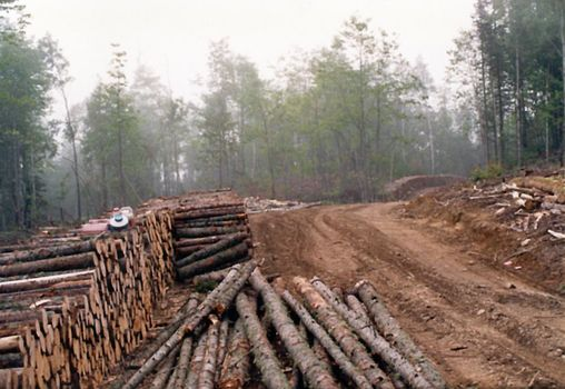 The Eastern United States: Logging in the Maine Woods picture 14