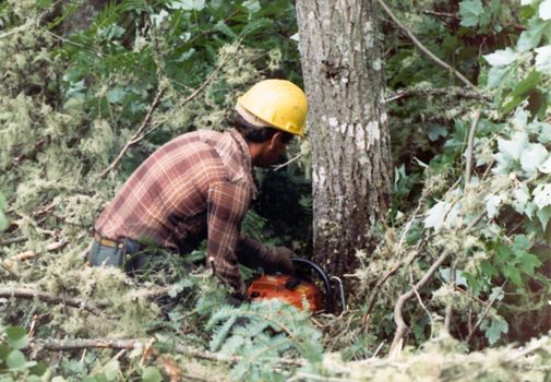 The Eastern United States: Logging in the Maine Woods picture 4