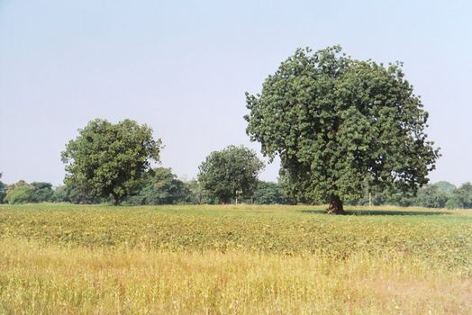 Northern India: Bundelkhand  picture 3