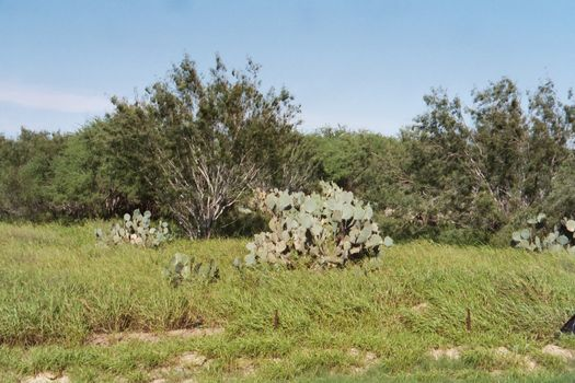 The Western United States: Laredo picture 1