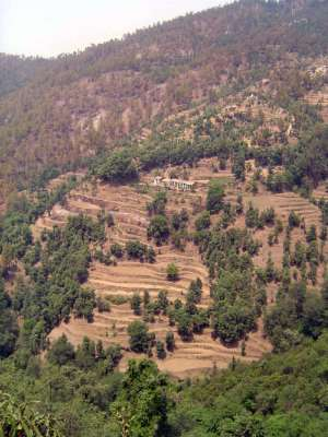Northern India: Almora District picture 20