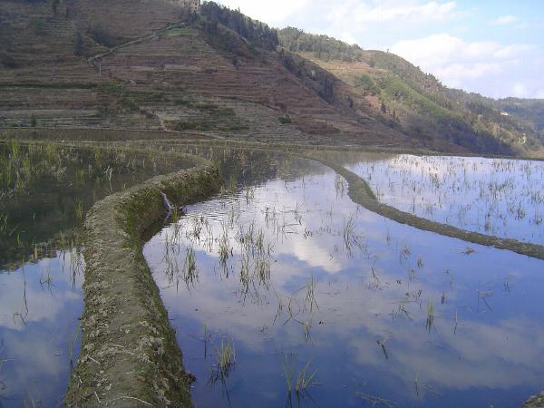 China: Hani Terraces 1: Walking a Channel picture 13