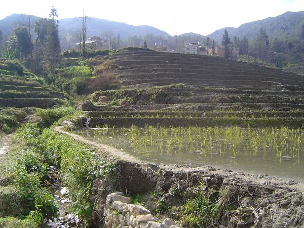 China: Hani Terraces 1: Walking a Channel picture 16