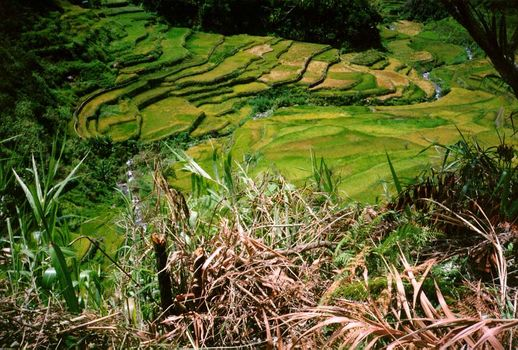 The Philippines: Banaue picture 9