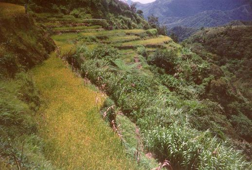The Philippines: Banaue picture 8