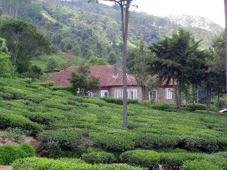 Sri Lanka: Tea Country picture 22