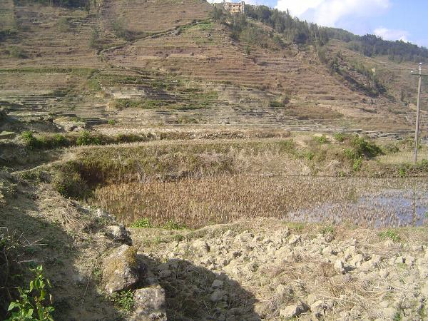 China: Hani Terraces 1: Walking a Channel picture 34